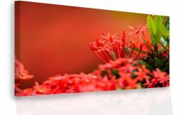 InSmile ® Moderní obraz - èervené kvìty Velikost  120x80 cm