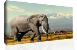 InSmile ® Obraz na plátnì - slon u hor