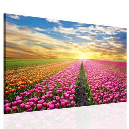Malvis Obraz na stìnu - barevné tulipány