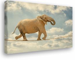 InSmile ® Obraz na plátnì - tanèící slon