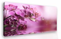 Malvis Obraz na zeï - orchidej