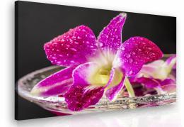 Malvis Obraz - orchidej fialová