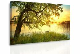 Malvis Obraz na stìnu - strom