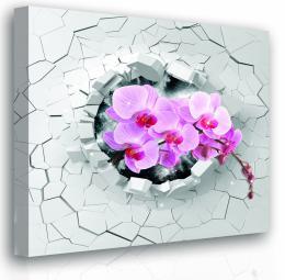 Malvis Obraz - orchidej