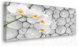 Malvis Obraz - orchidej s diamanty