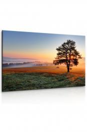 InSmile ® Obraz - ranní jinovatka
