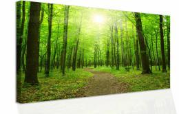 InSmile ® Obraz - procházka po lese