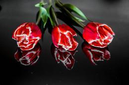 InSmile ® Obraz - èervené tulipány Velikost  90x60 cm