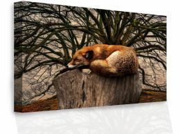 Malvis Obraz - Spící liška