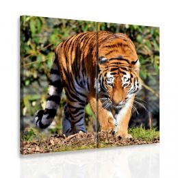 InSmile ® Vícedílný obraz - Tygr