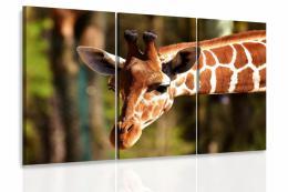 InSmile ® Obraz - Žirafa