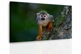 InSmile ® Obraz - Opièka na stromì