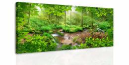 InSmile ® Obraz - Pohled do lesa