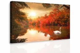 Malvis Obraz - Plující labu�