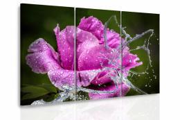 InSmile ® Vícedílný obraz - Pivoòka a vodní motýl