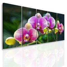 InSmile ® Vícedílný obraz - Divoká orchidej