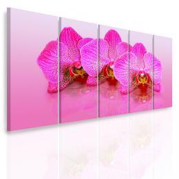 InSmile ® Vícedílný obraz - Rùžové orchideje