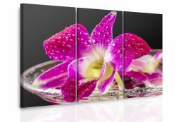 InSmile ® Vícedílný obraz - Fialová orchidej