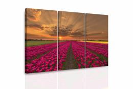 InSmile ® Vícedílný obraz - Záplava tulipánù
