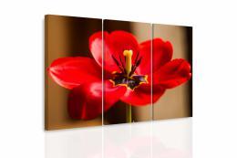 InSmile ® Vícedílný obraz - Èervený tulipán