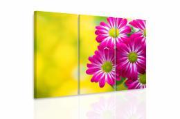 InSmile ® Vícedílný obraz - Chryzantémy