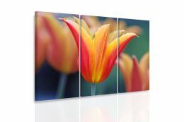 InSmile ® Vícedílný obraz - Tulipán