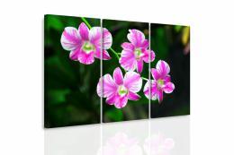 InSmile ® Vícedílný obraz - Orchidej v pøírodì