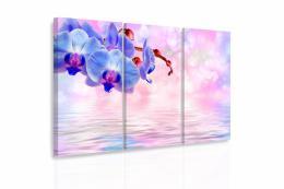 InSmile ® Vícedílný obraz - Modrá orchidej