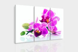 InSmile ® Vícedílný obraz - Orchidej v prostoru