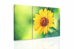 InSmile ® Vícedílný obraz - Žlutý kvìt