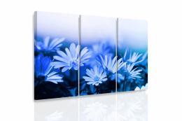 InSmile ® Vícedílný obraz - Modré kopretiny