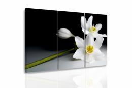 InSmile ® Vícedílný obraz - Orchidej ve tmì