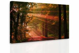 InSmile ® Obraz - Podzimní les