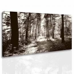 InSmile ® Obraz lesní pìšina