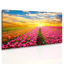 Malvis Obraz ráj tulipánù