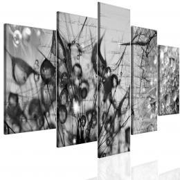 Malvis Èernobílý obraz krása v kapkách rosy