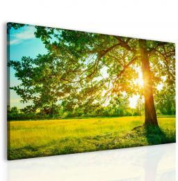 InSmile ® Strom v ranním slunci