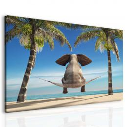 Malvis Vtipný slon na pláži