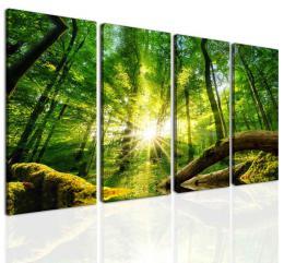 InSmile ® Obraz síla lesa