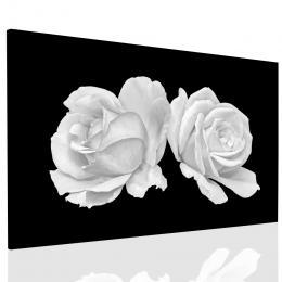 Malvis Obraz tajemná bílá rùže