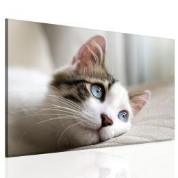 InSmile ® Obraz roztomilá koèka
