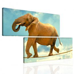 InSmile ® Sloní rovnováha