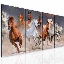 Malvis Obraz krása koní