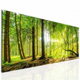 InSmile ® Obraz slunce v lese