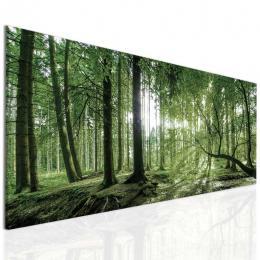 InSmile ® Obraz ranní slunce v lese