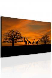 InSmile ® Obraz západ slunce na safari