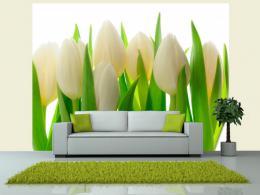 Murando DeLuxe Fototapeta bílé tulipány