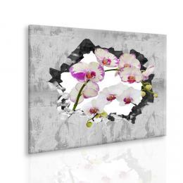 Malvis Obraz orchidej ve zdi II