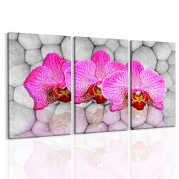 Malvis Obraz orchideje na kamenech