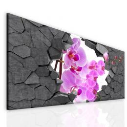 Malvis Obraz orchidej ve zdi